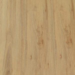 Desert oak 11955